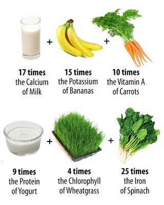 moringa oleifera nutrient comparison image showing 100 grams of moringa oleifera to have 17 times the calcium of milk, 15 times the potassium of bananas, 10 times the vitamin a of carrots, 9 times the protein of yogurt, 4 times the chlorophyll of wheatgrass, and 25 times the iron of spinach