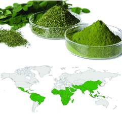 image of the growing regions for moringa oleifera